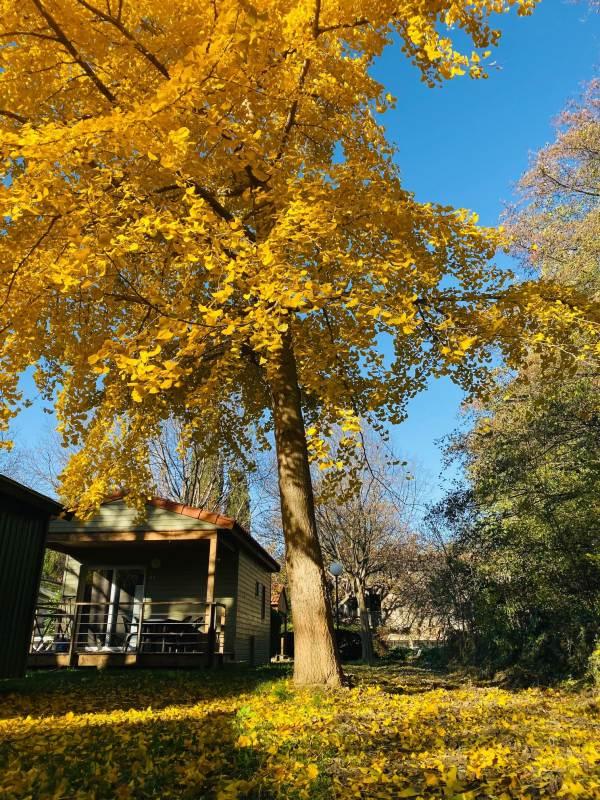 Camping Les Portes du Canigou