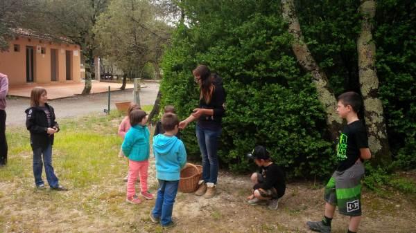 Camping Le Sous-Bois