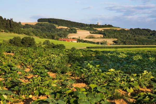 Domaine la Garenne