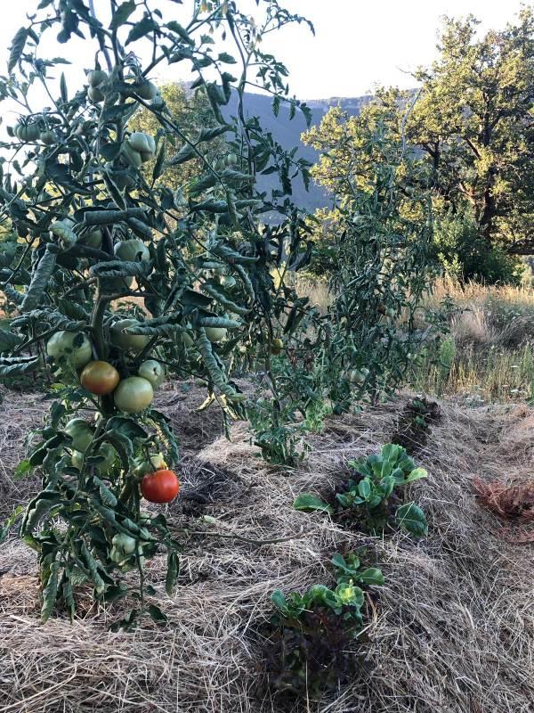 Jardin de permaculture
