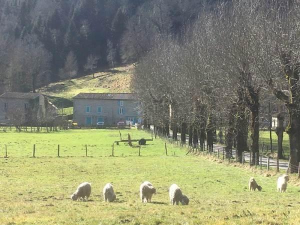 Au mohair des Alpy