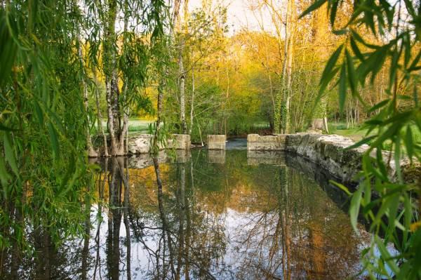 """La rivière nous offre la fraicheur grâce une """"petite piscine naturelle"""" et l'ombre du saule pleureur."""