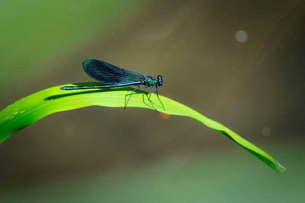Photo de libellule prise au Grand Châtelier, symbole d'une biodiversité et d'une bonne qualité d'eau. Vous en admirerez beaucoup l'été!