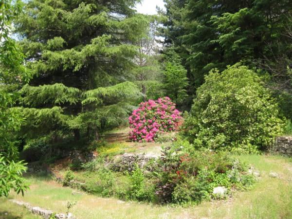 cèdres, rhododendron et jasmin