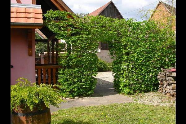 Passage sous les charmes vue coté jardin