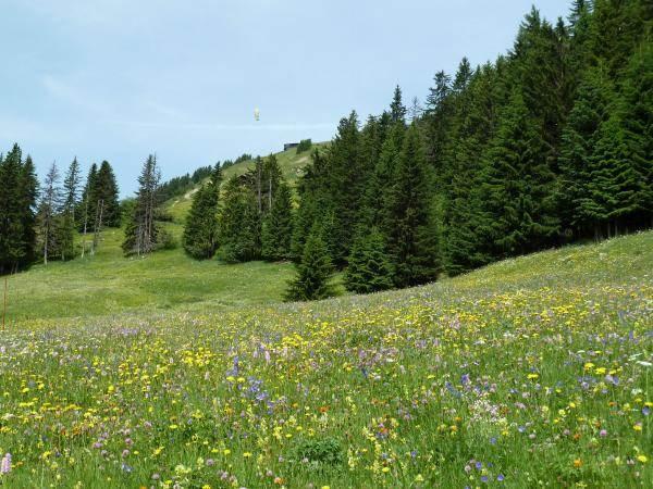 Les Alpages de Bisanne en fleurs