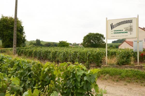 Villedommange, petite village viticole au coeur des vignes