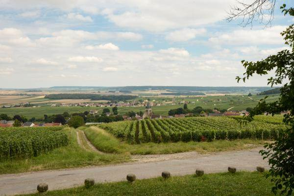 Vue sur vignes