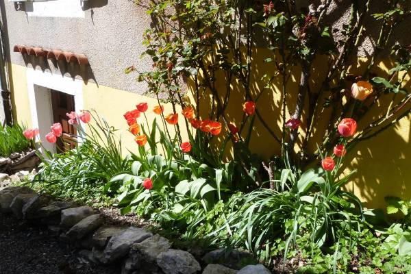 Les tulipes côté sud