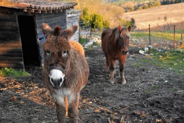 Valentine l'âne, et Gaston le cheval.