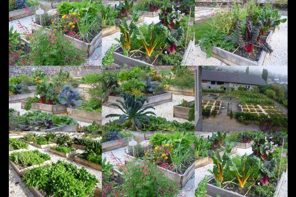 le jardin potager bio en 88 carrés