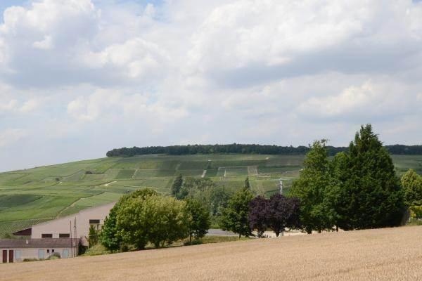 Très belle vue sur vignes