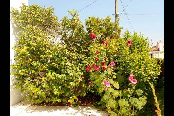 Jardin  Roses Trémières les Sables d'Olonne