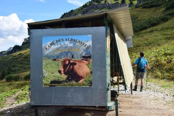 Les Tarines et la trayeuse mobile en alpages