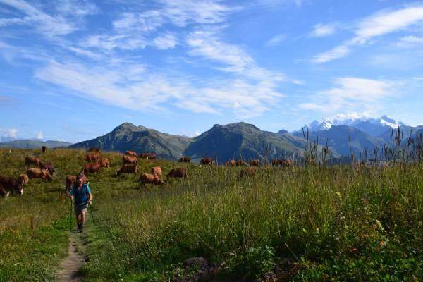 Les alpages face au Mont Blanc