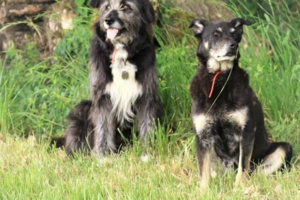 Réglisse et Choco, les chiennes de la maison