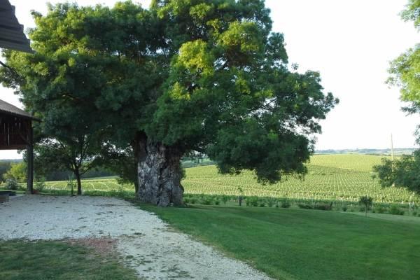 Notre bel arbre. A vous de devinez son espèce...